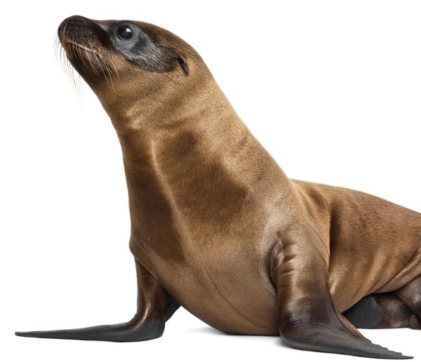 Marine Creatures Seal